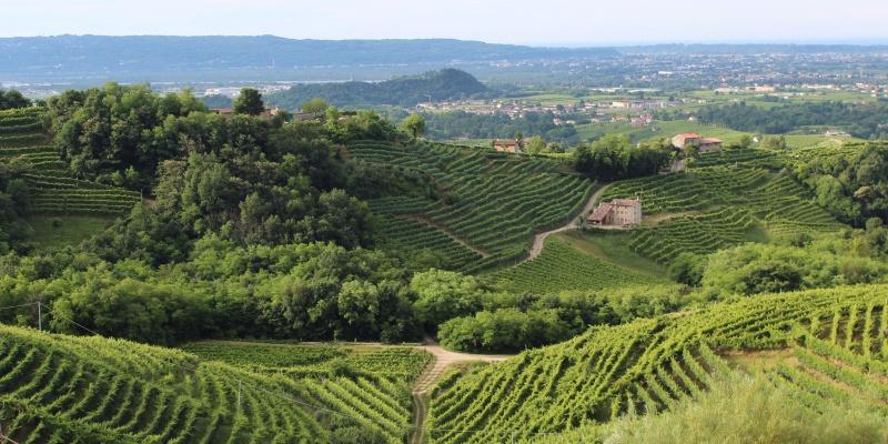 Le colline trevigiane: in viaggio con Giovanni Comisso fra arte, storia e vita quotidiana